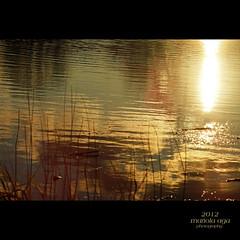 Alchemy at sunset (mariola aga) Tags: park autumn light sunset sun sunlight lake abstract reflection nature water grass square golden surface shore tones alchemy thegalaxy mygearandme mygearandmepremium mygearandmebronze