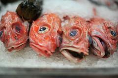 Bridget Baker_Marketplace_The silent fish quartet
