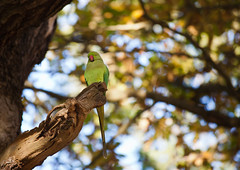 Autumn2012-74.jpg (fyldeeddie) Tags: autumn colour london leaves richmondpark canon70300mm