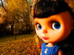 314/365 A Goldie's Autumn Dream!!