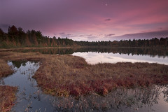 _IGP1409* (Northwoods Photos) Tags: pink autumn sunset brown lake fall nature water beauty wisconsin clouds reflections season evening scenery pentax fallcolors foliage grasses bog conifers wetland northwoods tamarack