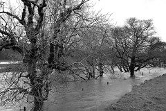 IN TOO DEEP (simongavin83) Tags: trees winter blackandwhite tree wet water river scotland flood floods soaking rainwater flooded drenched ayrshire watery floodwater deepwater crosshill southayrshire nikond5100