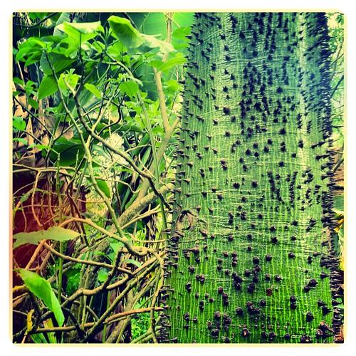 Flickriver: Photoset \'Fairchild Tropical Garden\' by David Kozlowski