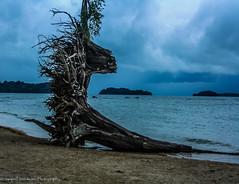 Isolated (SwapnilSSonawane) Tags: sea trunk isolated andaman seaface andamanislands andamanandnicobarislands ringexcellence