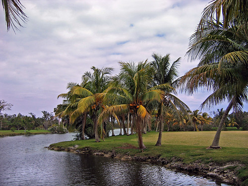 Palms, Fairchild Tropical Gardens