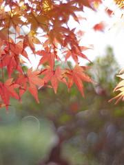 (Polotaro) Tags: nature pen olympus    ep1    gzuiko50mmf14