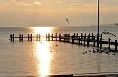 Le ponton aux oiseaux (Diegojack) Tags: eau lac couchant lumières oiseaux mouettes mfcc préverenges
