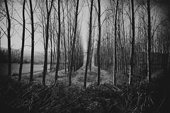 (Sakis Dazanis) Tags: trees landscape nikon serres kerkini d700   dazanis