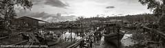 Perkampungan Nelayan Kuala Sepetang (WMHafis) Tags: panorama malaysia kuala taiping matang sepetang perak nelayan perkampungan