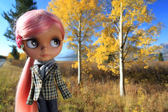 The Height of Autumn