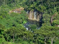 Cascata do Caracol (Arimm) Tags: tree water brasil pine forest waterfall photographer araucaria cascade arimm