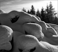 Snow pattern (Werner Koenig) Tags: winter blackandwhite bw snow switzerland blackwhite baw baselland biotope g10 canong10 bckten flickricious365