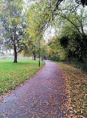 2012-10-22 | 01 Hill's meadow - tree down (Mark & Naomi Iliff) Tags: thames river caversham hillsmeadow