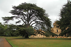 Osborne House - East Cowes Isle of Wight (England) (Meteorry) Tags: county uk greatbritain england house tree castle english grass island europe unitedkingdom britain lawn september isleofwight solent british residence palazzo arbre chteau princealbert queenvictoria osborne pelouse 2012 eastcowes le summerresidence meteorry italianrenaissance thomascubitt