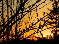 Sunset In Vancouver, British Columbia (Explore Dec 18, 2012) (careth@2012) Tags: sunset vancouver scenery beautifulearth thebestofbeautifulearth certifiedphotographerlevel1 redcarpethalloffame topphotoexpertlevel2 chariotsofnaturelevel1 bestofredcarpethalloffame chariotsofnaturelevel2