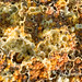 Dallol abstract compositions