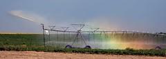 Morgan County (Colorado) Road AA, between MCR 19 and MCR 2100, NE of Fort Morgan PLDS1394 (Paul L Dineen) Tags: morgancounty colorado rainbow color cropsprinkler water sprinkler centerpivotsprinkler