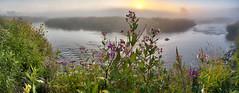 P8020016-54 pano2 -HDR-ICEv2-G-wide (virgil martin) Tags: panorama dawn sunrise goldenhour landscape river mist morningmist wildflowers grandriver inverhaugh wellingtoncounty ontario canada olympusomdem5 panasoniclumix20mmf17 oloneo microsoftice gimp