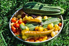 _MG_6257 copy copy (Bill Gagne Photography) Tags: vegetables tomatoes peppers zucchini vsco vscopresets canon colors color green canonef135mmf2lusm canoneos5dmkll 135mm ef135mm 135l august summer harwintonconnecticut litchfieldcountyconnecticut thelook billsphotos billgagnephotography