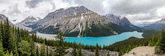 Peyto Lake Pan (TheReilDeal) Tags: banff banffnationalpark peytolake parkerridge glacier turqoise lake