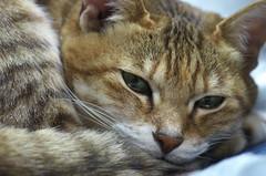 20130127-IMGS3626 (Jun Shiraishi) Tags: apolanthar90mm closeuplens k5s