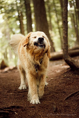 Shake it off! (naasha2006) Tags: forest bokeh dogs dog jowls
