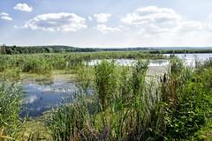 Delta Neajlovului (striker_ro2) Tags: swamp river water nature landscape romania comana delta green neajlov