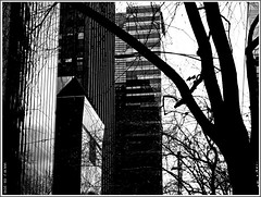 Melbourne CBD office Towers on William Street (fotograf1v2) Tags: melbourne victoria australia statecapital city architecture building streettrees earlyspring streetscape monochrome bw greyscale officeblocks skyscrapers