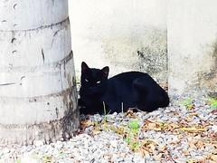 Gato Preto...  (dboramaria1) Tags: samsung gato gatopreto vida ar natureza tronco black galaxys7 s7 fotografia