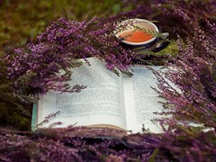 books may well be the only true magic  (olli_loo) Tags: book heather decor decoration cup cupoftea moor moorland manual manuallens manualfocus flowers flowermagic promura promura135 135mm magic magicforest magicflowers forest forestgifts stilllife stillphotography moss heart fairytales outdoor