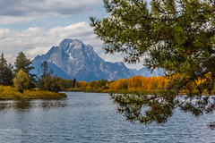 Fall at Oxbow Bend (Wycpl) Tags: grandtetonnationalpark wyoming mountains water oxbowbend fall trees