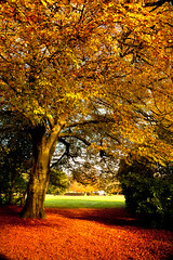 Golden Gateway (juliereynoldsphotography) Tags: trees leaves liverpool parks pathway croxtethpark juliereynolds