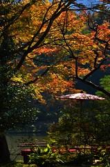 DSC_0522 (tanny ♪) Tags: city autumn red plants green fall yellow japan tokyo october furukawateien