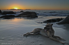 Jock enjoying the sunrise (galemcall) Tags: dog beach sunrise southafrica gale westerncape mcall smitswinkel blinkagain