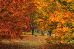A Finch Arboretum Autumn (NikonDigifan) Tags: autumn trees fall leaves nikon spokane arboretum autumncolors nik d300 washngton fincharboretum colorefexpro tamron18270 mikegassphotography nikcollection