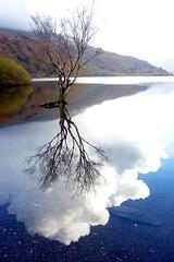 Cloudy waters (Lulabell*) Tags: blue autumn lake reflection tree water leaves wales clouds alone branches cymru lonely slate llanberis gwynedd llyn llynpadarn