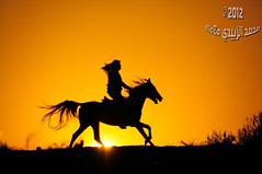 :   1165 (momazo) Tags: sunset horse sun silhouette night mare run knight     faras