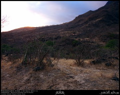 Ghiadh, Rakhyout, Dhofar (Shanfari.net) Tags: nature season lumix raw natural panasonic oman fz zufar rw2 salalah sultanate dhofar  khareef    dufar      dhufar governorate dofar fz38 fz35 dmcfz35