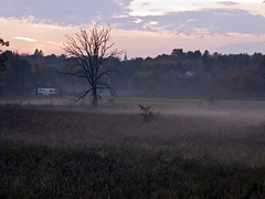 Misty Sunset (Boneil Photography) Tags: sunset mist tree silhouette fog ma panasonic m42 manualfocus haverhill screwmount m43 28mmf28macro microfourthirds boneilphotography dmcg10 brendanoneil superalbinon