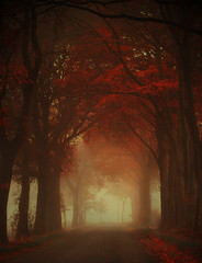 Autumn is a second spring when every leaf is a flower (sole) Tags: road autumn mist holland nature netherlands misty landscape nederland natuur atmosphere dreamscape drenthe naturesfinest artisticexpression sole carmengonzalez naturepoetry theroadtoheaven carmengonzalez carmengonzalezphotography