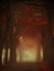 "Autumn is a second spring when every leaf is a flower (soleá) Tags: road autumn mist holland nature netherlands misty landscape nederland natuur atmosphere dreamscape drenthe naturesfinest artisticexpression soleá carmengonzalez naturepoetry theroadtoheaven ""carmengonzalez"" carmengonzalezphotography"