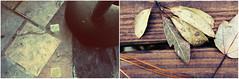Forest Teapot © (Blackcatatheart) Tags: wood tree texture stone breakfast square leaf stem tea outdoor mosaic mason crack kettle edge boardwalk dust cracked teaparty