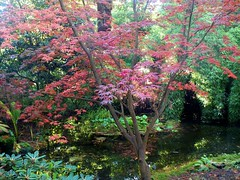 acer tree (carol_malky) Tags: light tree water reflections autumncolours acer greens dorset reds poole comptonacres