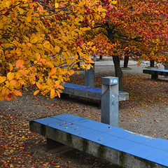 Blue and gold (Rising Damp) Tags: autumn copenhagen urbannature blueandgold urbangeometry bluebench autumngold