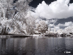 IR converted Canon G3 with external 720nm filter (LValdes) Tags: photoshop ir florida canong3 hialeah digitalir irconverted ameliaearhartpark lvaldes