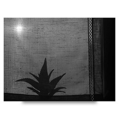 (∙ мake it ғuиky ∙) Tags: camera windows friends white black film woods kodak tmax hc110 medium format lc 6x45 bianco ilford fp4 nero medio mamiya645 formato panf pellicola valmadrera sekor8019 selfdevelope morrolo