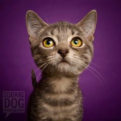Purple. (Charlie the Cheeky Monkey) Tags: animal cat kitten purple shelter lecture adopt preach dealwithit adoptionanimals lookuplookdownlookallaround ldlportraits highqualityanimals