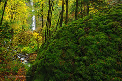 Starvation Creek Fall (Piriya Pete Wongkongkathep) Tags: autumn green fall rock oregon forest river waterfall columbia gorge starvation