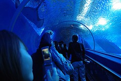 Through the aquarium tunnel (runslikethewind83) Tags: people woman mobile japan aquarium photo marine cellphone tunnel sealife  kanagawa   seaparadise kanazawahakkei