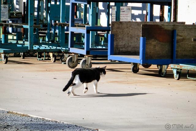 Today's Cat@2012-11-27